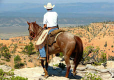 bryce-canyon-motel-horse