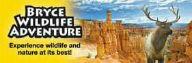 Bryce Canyon Wildlife Banner